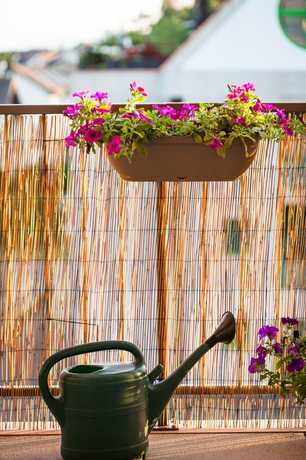 Balcone di estate che fa il giardinaggio con i fiori della petunia immagine stock libera da diritti