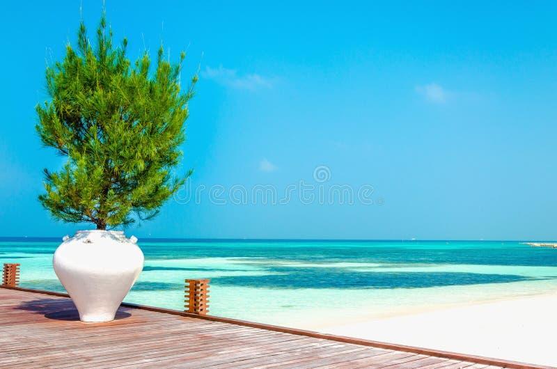 Balcone di legno di una località di soggiorno lussuosa con una vista di una spiaggia di paradiso con le palme alte fotografie stock libere da diritti