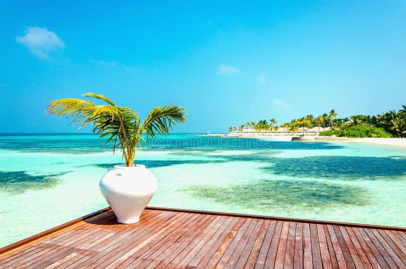 Balcone di legno di una località di soggiorno lussuosa con una vista di una spiaggia di paradiso con le palme alte immagine stock libera da diritti