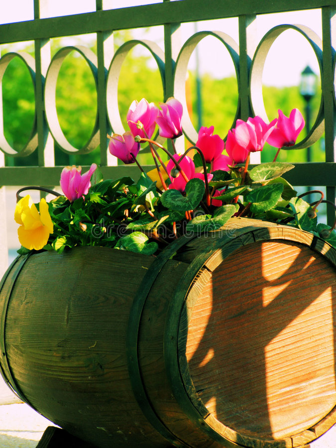 Balcony Flowers Stock Images