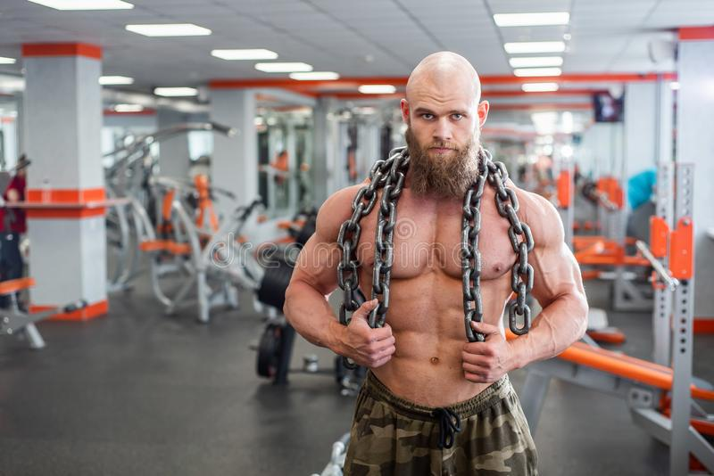 A bald, bearded bodybuilder with large relief muscles holds a heavy thick chain in his hands. Bright gym. A bald, bearded bodybuilder with large relief muscles royalty free stock photography