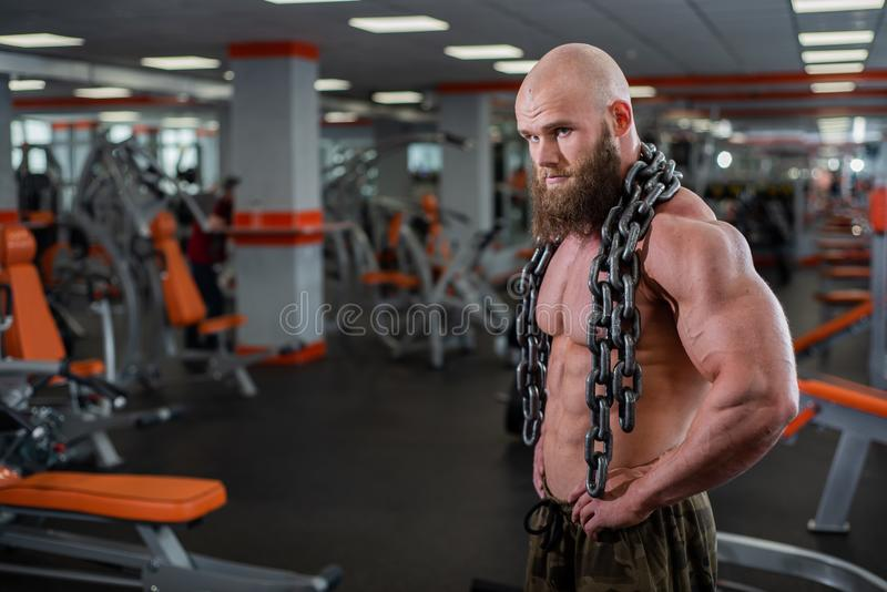 A bald, bearded bodybuilder with large relief muscles holds a heavy thick chain in his hands. Bright gym. A bald, bearded bodybuilder with large relief muscles stock images