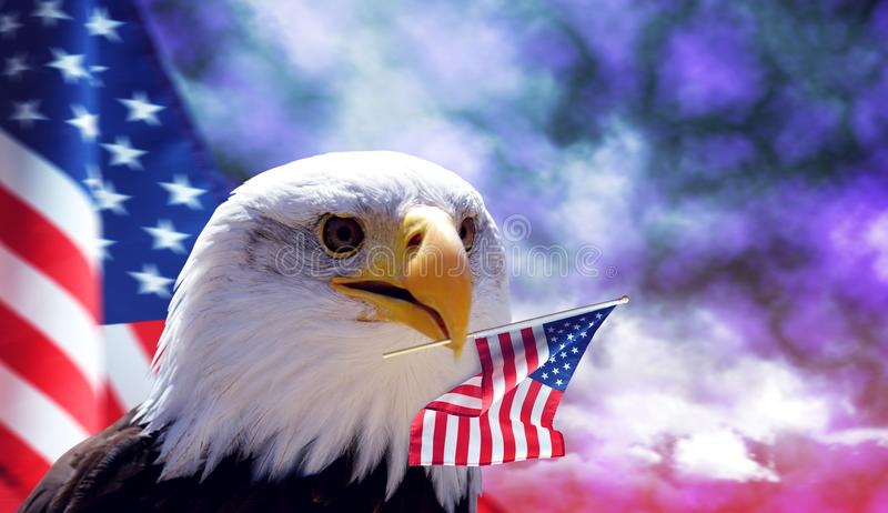 Bald Eagle and American flag. royalty free stock photo