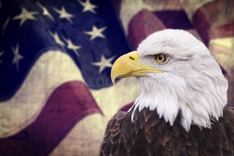 Bald eagle with the american flag out of focus. And grunge look royalty free stock photography