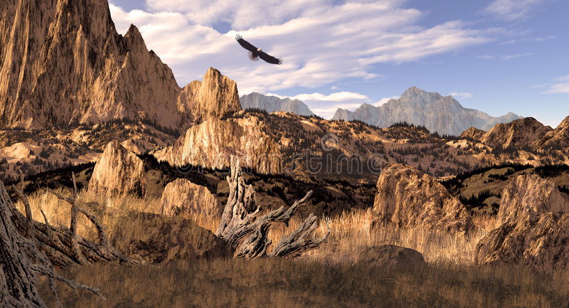 Download Bald Eagle In The Colorado Rockies Stock Photo - Image: 1962994