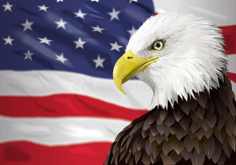 Bald eagle and flag vector illustration