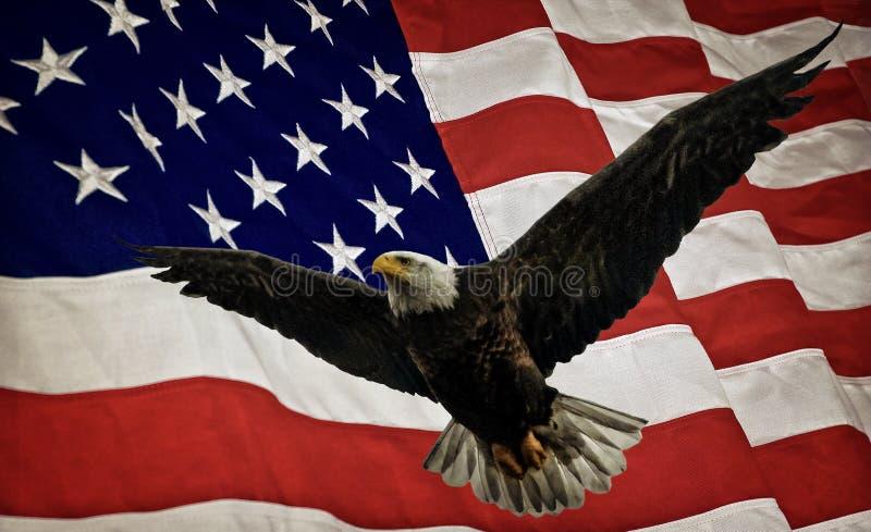 Bald Eagle and Flag stock photography