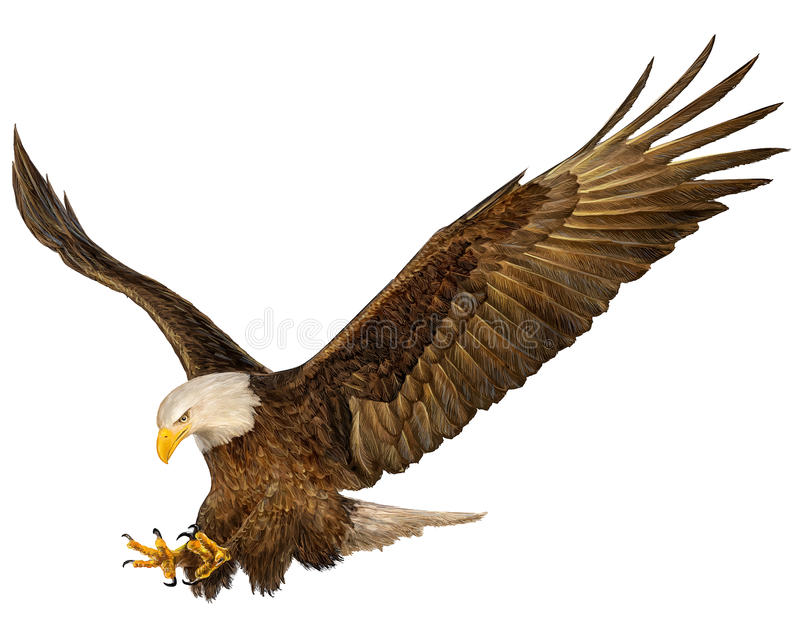 Bald Eagle. Hand draw on white background vector illustration