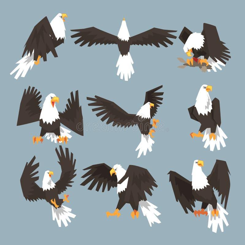 Bald Eagle An Image Set Hunting On Gray Background vector illustration