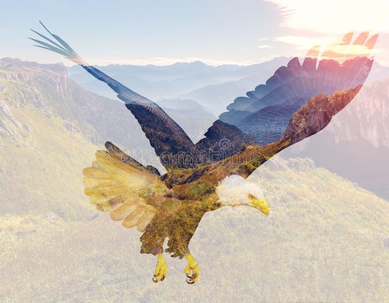 Bald eagle on mountain landscape background. stock photo