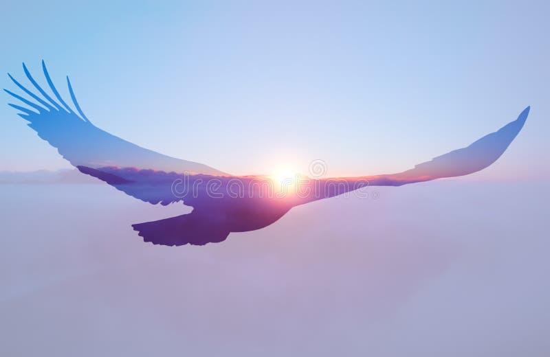 Bald eagle on sunset sky background. stock photo