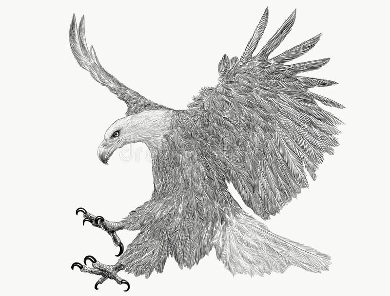 Bald eagle swoop attack hand draw monochrome on white background. vector illustration