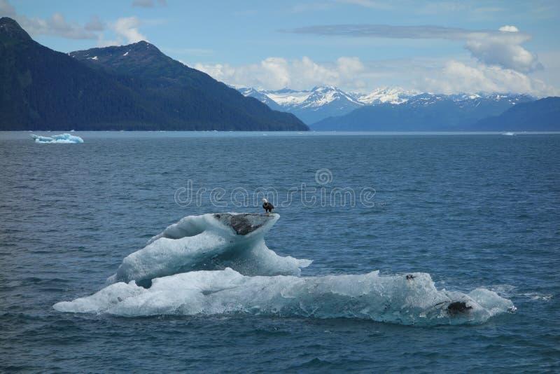 A bald eagle on top of an iceberg. stock photo