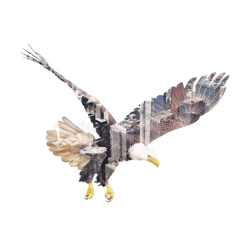 Bald eagle on Toronto center background. stock image
