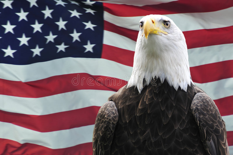 Bald Eagle and USA flag stock image Image of majestic