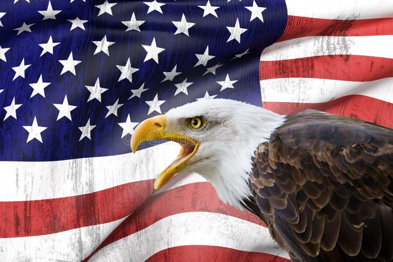 Bald eagle and USA flag royalty free stock image
