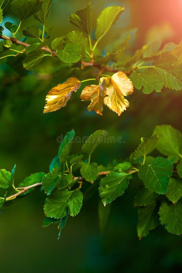 Bald Herbst, drehen sich die Blätter golden lizenzfreie stockfotos