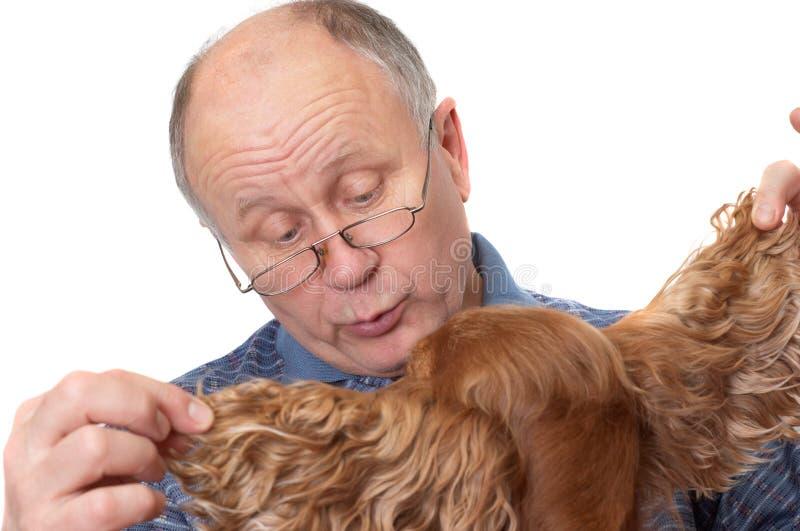 Bald senior man with dog stock image