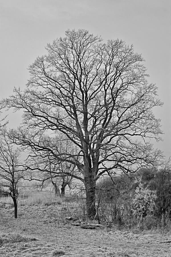 Download Bald Tree Royalty Free Stock Photos - Image: 27534858