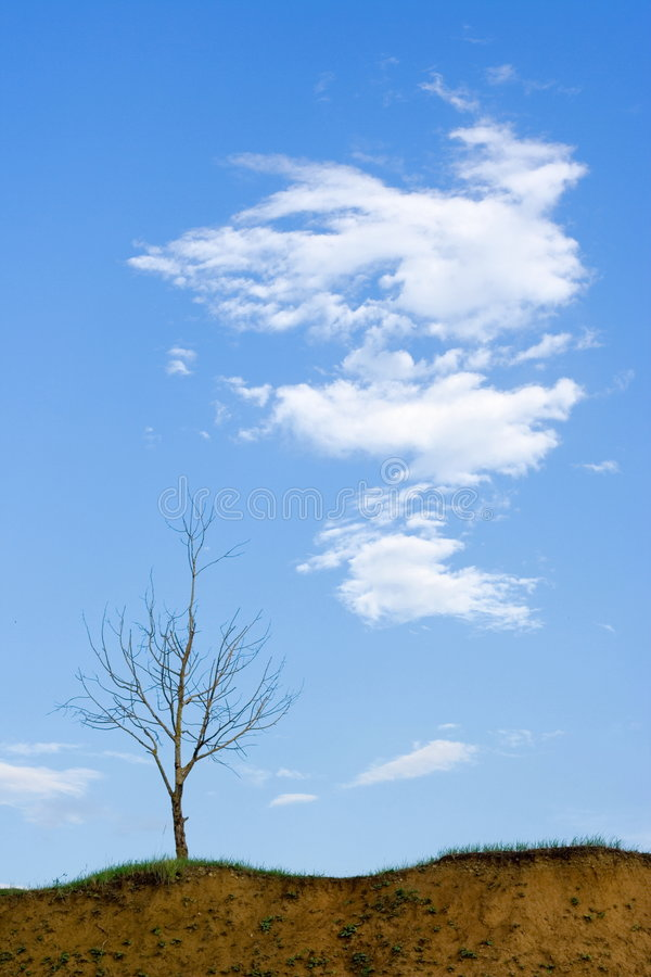 Bald Tree And Cloud Stock Photography