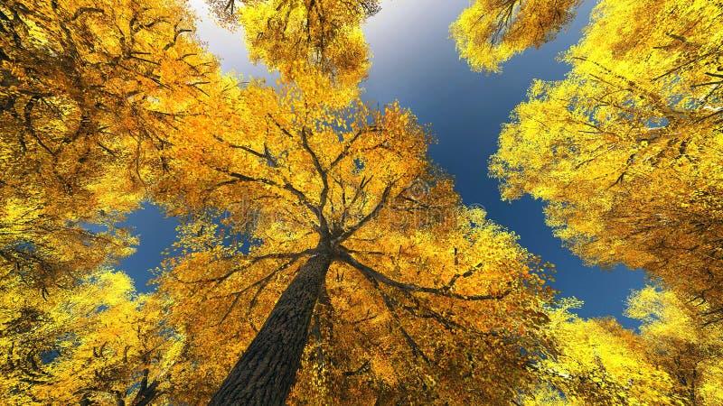 Baldacchino di albero immagine stock