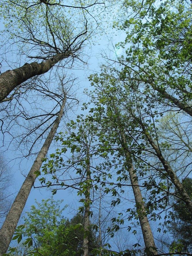 Baldacchino di albero fumoso delle montagne immagini stock libere da diritti