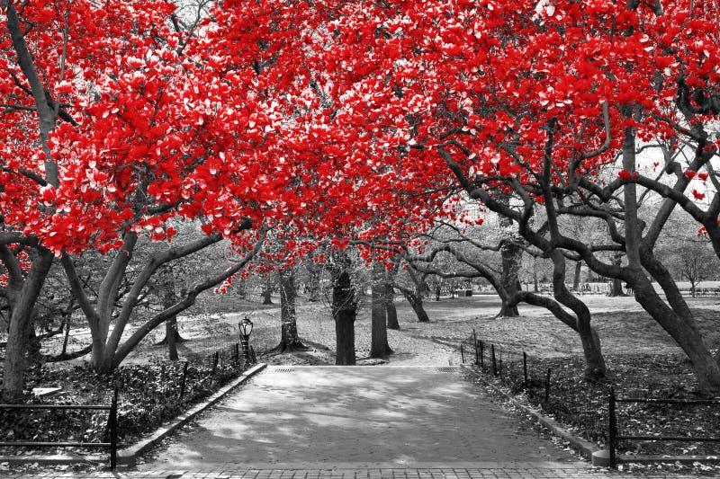 Baldachim czerwoni drzewa w surrealistycznej czarny i biały krajobrazowej scenie ja obraz royalty free
