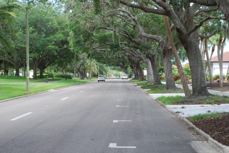 Baldachim droga w Wenecja Floryda obrazy royalty free