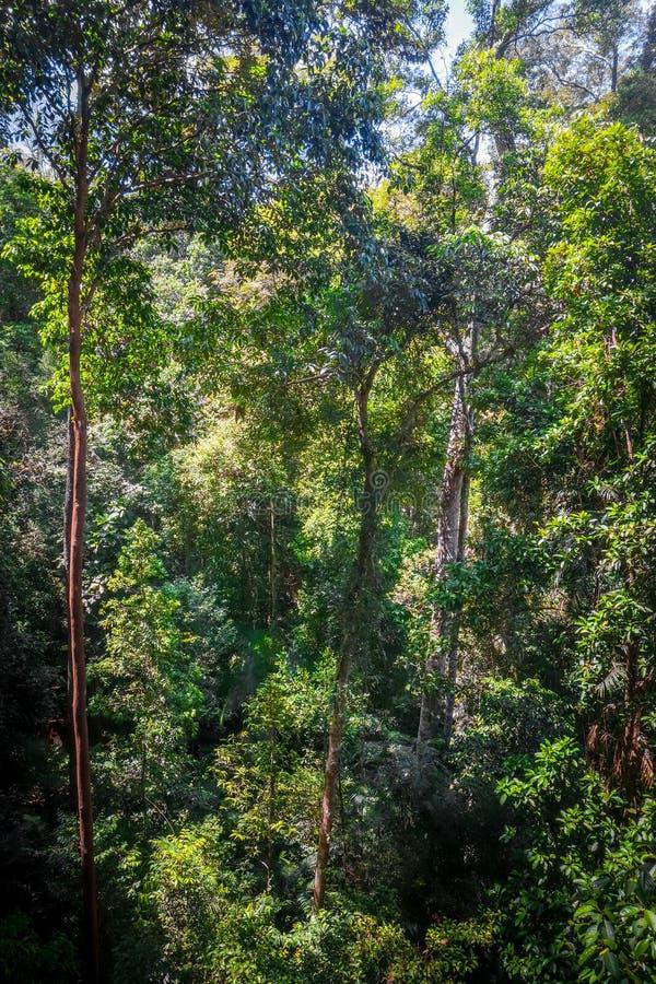 Baldachim w dżungli, Taman Negara park narodowy, Malezja obrazy royalty free
