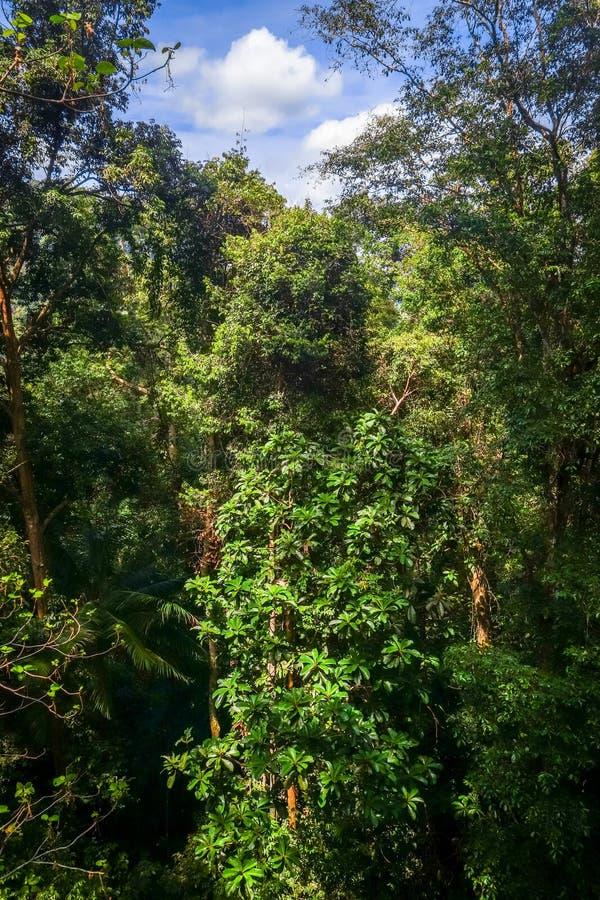 Baldachim w d?ungli, Taman Negara park narodowy, Malezja obraz stock