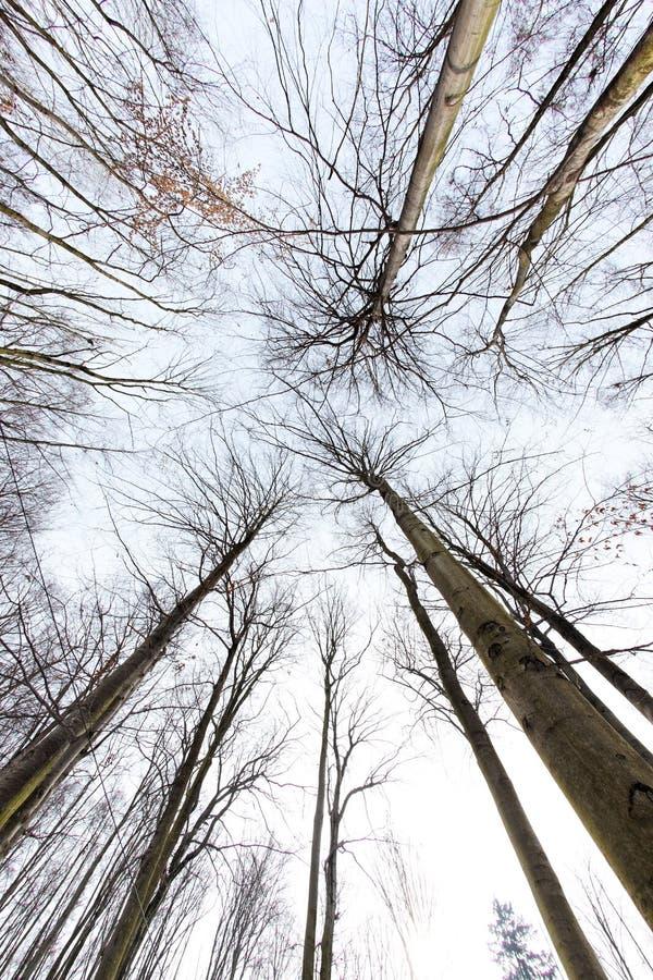 Download Baldachimu drzewo zdjęcie stock. Obraz złożonej z gałąź - 13341070