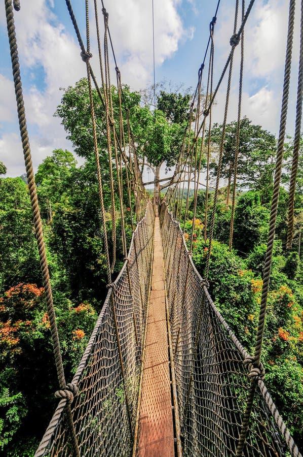 Baldachimu przejście Kakum park narodowy zdjęcia stock