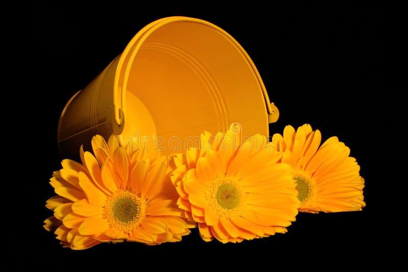 Balde amarelo de Gerber foto de stock