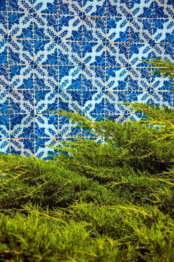 Baldosas cerámicas azules delante de ramas verdes del pino fotos de archivo libres de regalías