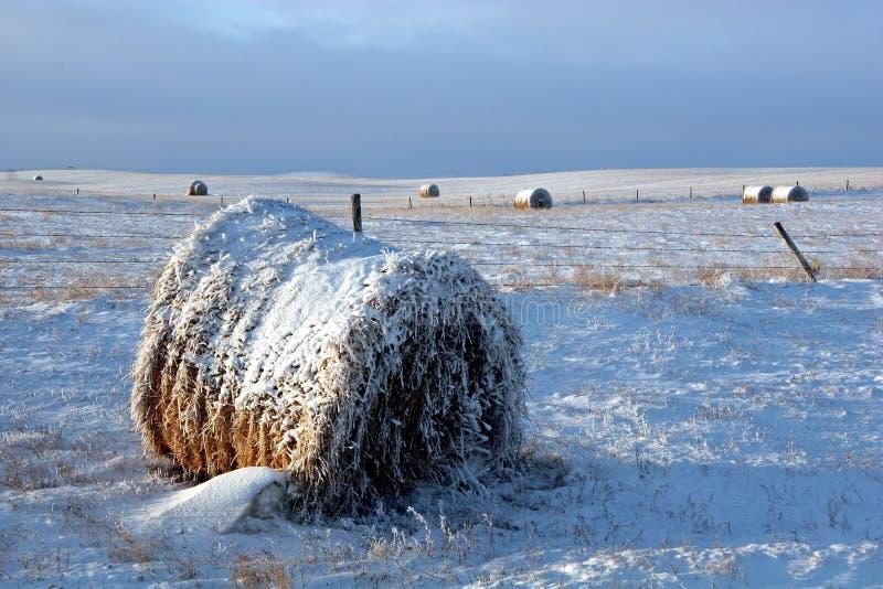 bale покрыл снежок поля стоковое изображение