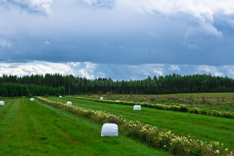 Download Bale Of Hale Stock Photography - Image: 25867072