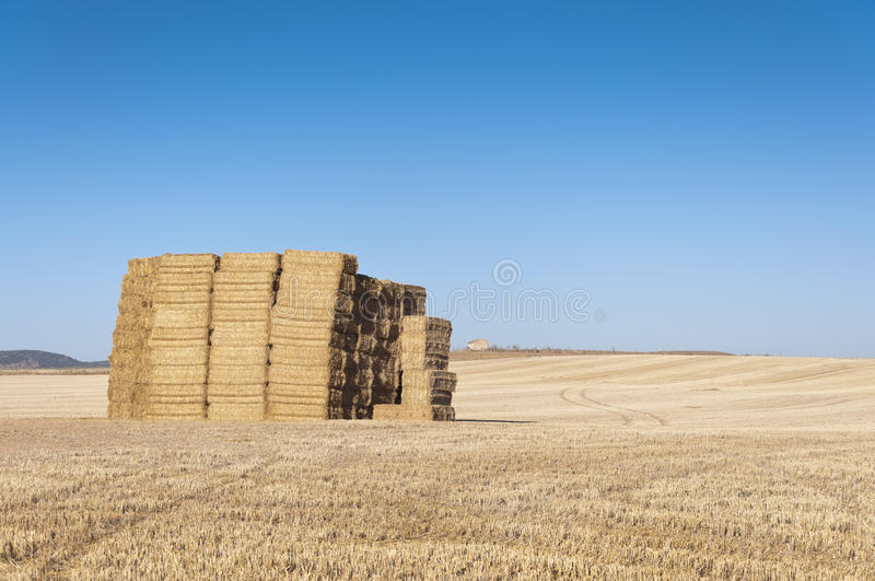Download Bale of hay stock photo. Image of irrigated, crop, farming - 21872304