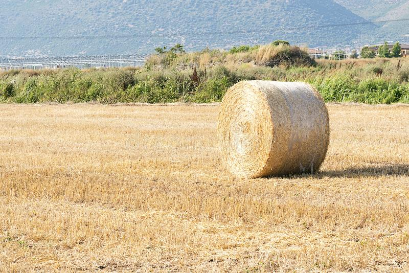 Download Bale of hay stock photo. Image of background, field, gold - 25626174