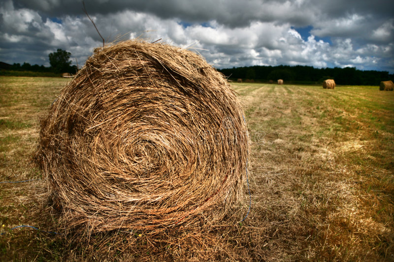 Bale of hay. A round bale of hay on a stubble field with a dramatic sky stock images