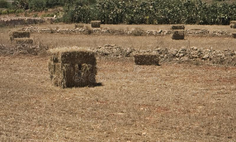 Bale of hay. agriculture farm and farming symbol of harvest time with dried grass straw as a bundled tied haystack royalty free stock photography