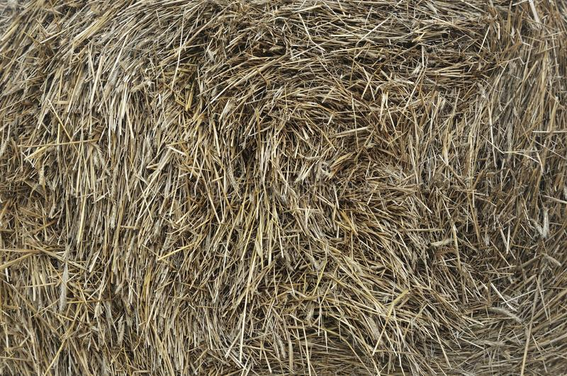 Bale of hay close-up as an agriculture farm and farming symbol of harvest time with dried grass straw as a bundled tied haystack royalty free stock images