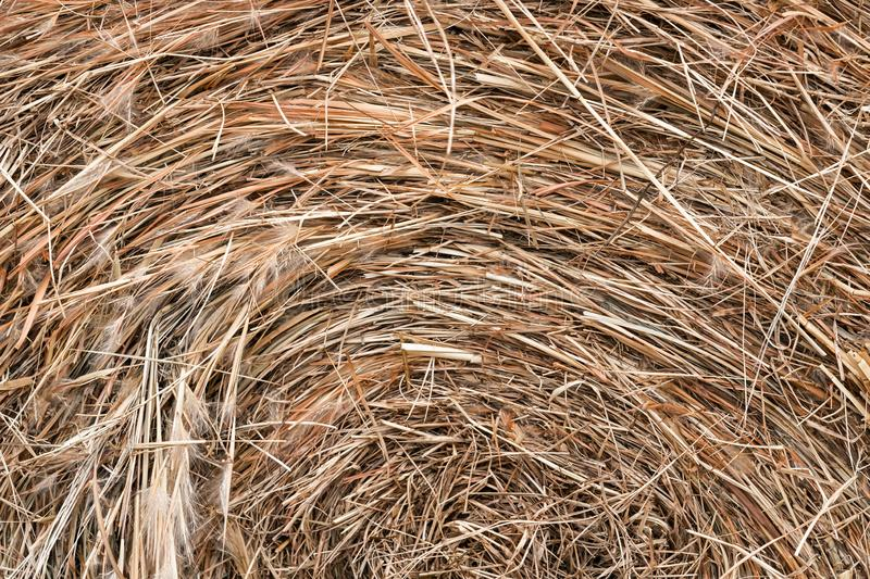 Bale of Hay close up - Background royalty free stock images