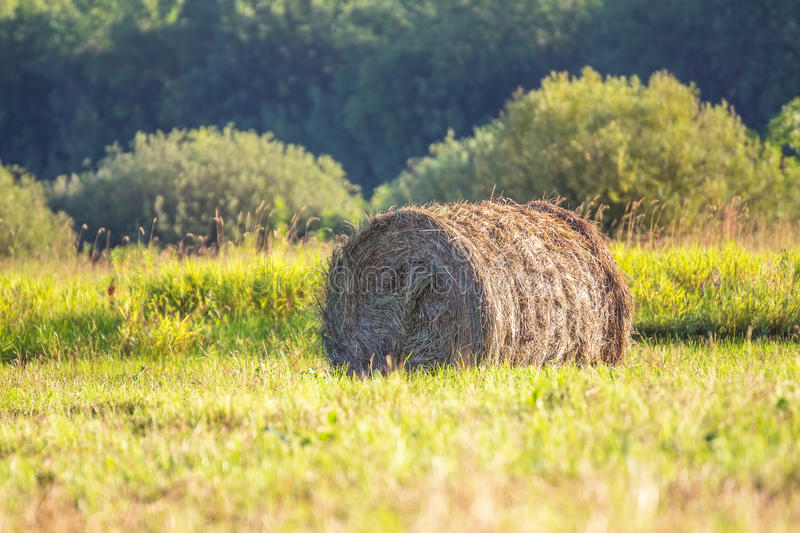 Bale of hay in the meadow stock photo