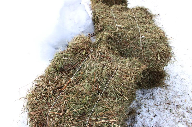 Bale of hay on snow. Bale of hay as an farming symbol of harvest time with dried grass straw as a bundled tied haystack stock photography