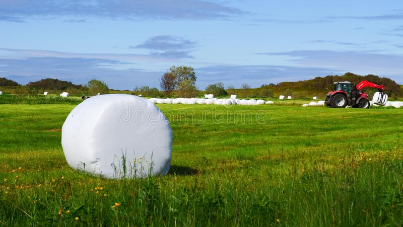 Bale of hay wrapped in plastic foil, Norway royalty free stock images