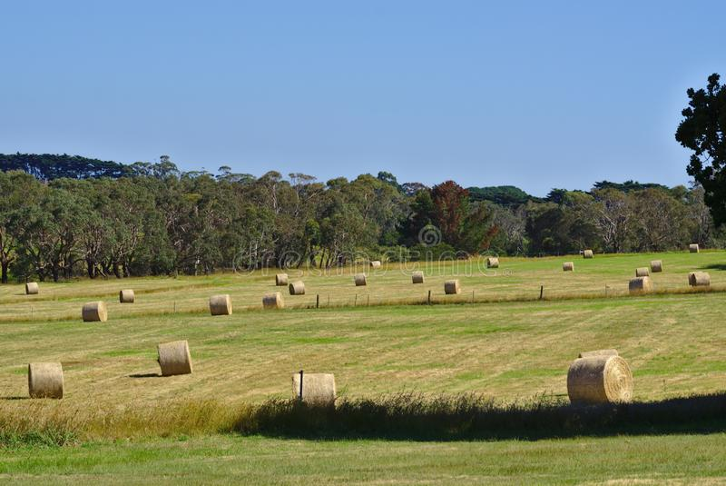 Bale of hays on meadow field. Distant view of bale of hays on meadow field on sunny day stock photos