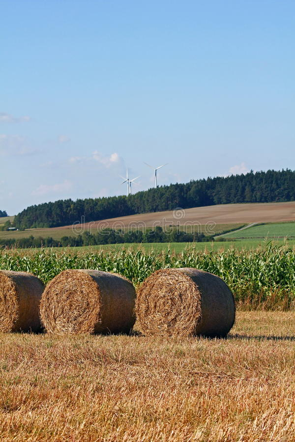 Download Bale of straw stock image. Image of corn, feed, beauty - 21018363