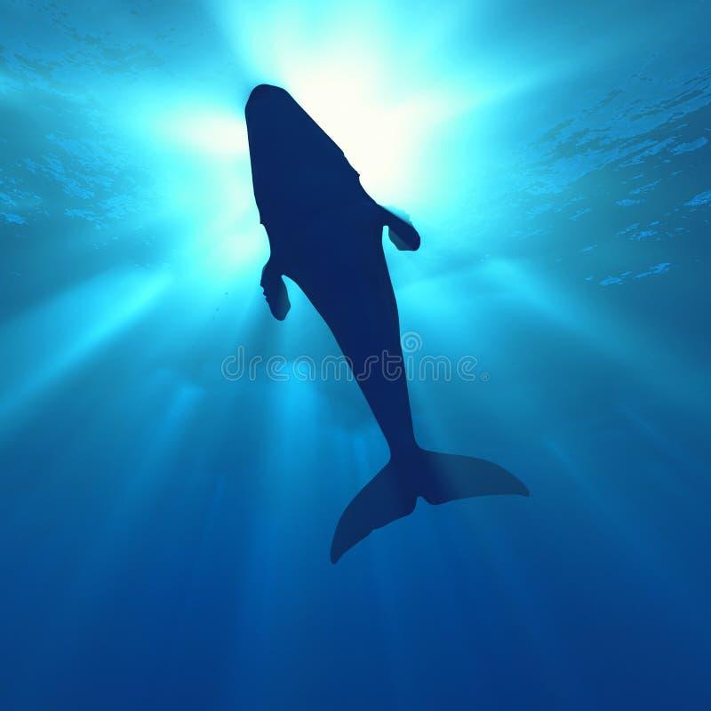baleia ilustração do vetor