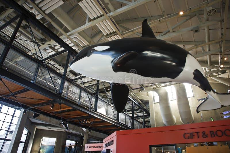 Baleia, aquário de Monterey fotografia de stock