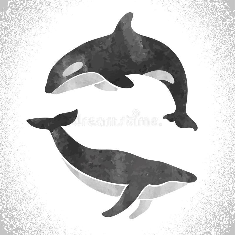 Baleia de assassino da aquarela e baleia de aleta no branco ilustração do vetor